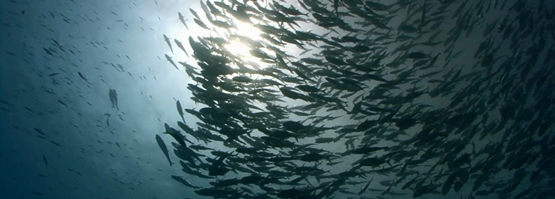 Msc global what does sustainable fishing really mean msc for What does sustainable fish mean