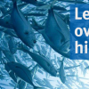 Let's make overfishing history