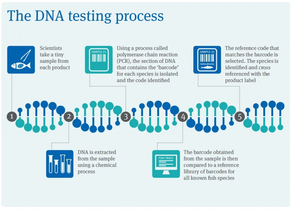 How dna testing works for Where to go for dna testing